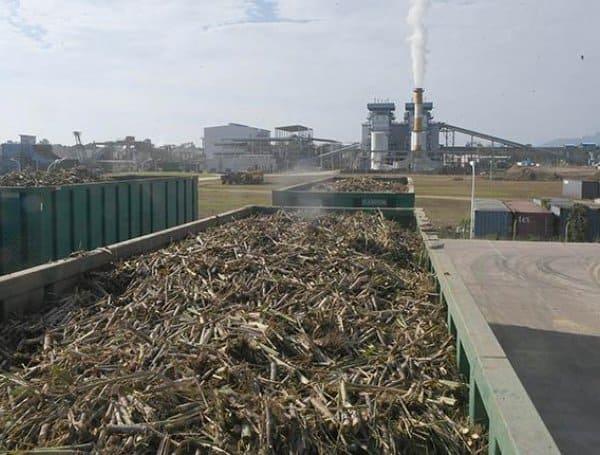 Zafra planta San Buenaventura