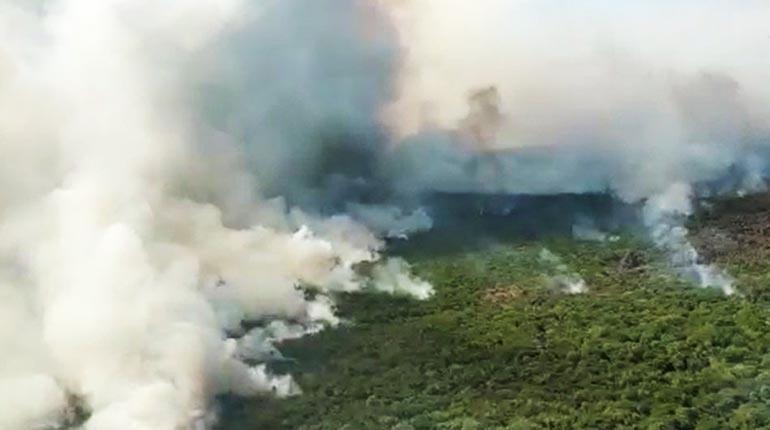 Incendios Forestales Santa Cruz 2020