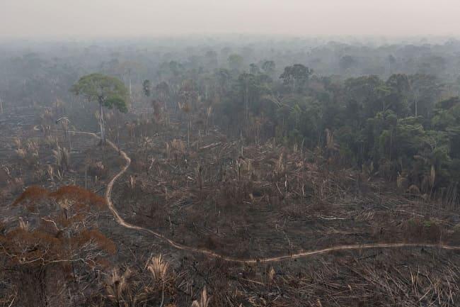Brasil incendios forestales reserva Jace-Paraná