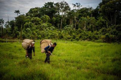 Colombia producción de coca