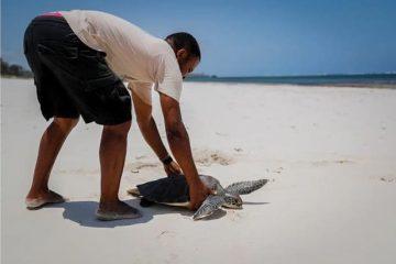 Biodiversidad-tortura atrapada por red pesquera